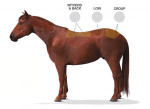 Atlarda Bel Ağrısı ve Tedavisi Yöntemleri 2