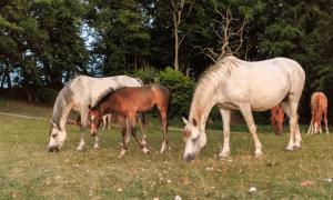 Gazi Koşusu 2020 - Gazi Koşusu Kazanan Atlar 3