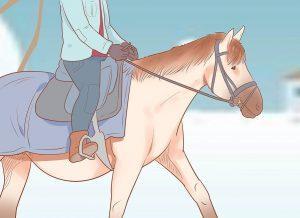 Atların Kışın Bakımı Nasıl Yapılmalıdır? 2
