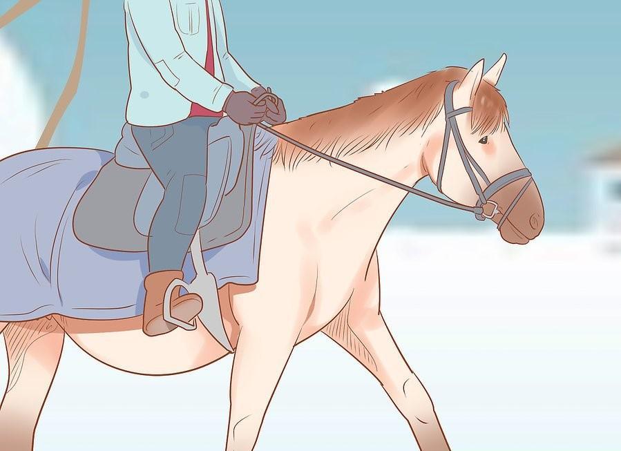 19 Adımda Karlı ve Soğuk Havalarda At Binişi ve Bakımı 11