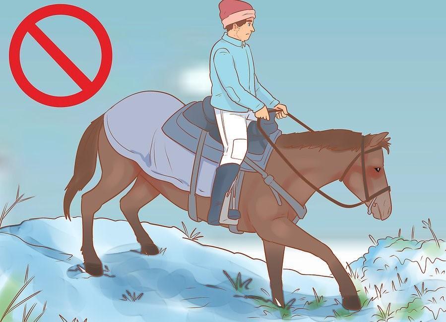 19 Adımda Karlı ve Soğuk Havalarda At Binişi ve Bakımı 12