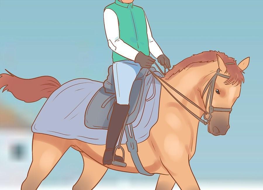 19 Adımda Karlı ve Soğuk Havalarda At Binişi ve Bakımı 14