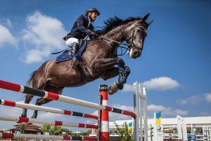 Atlarda Yemek Borusu Tıkanıklığı (Özofegal Obstruksiyon) 1