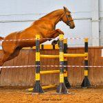 ahal teke atları