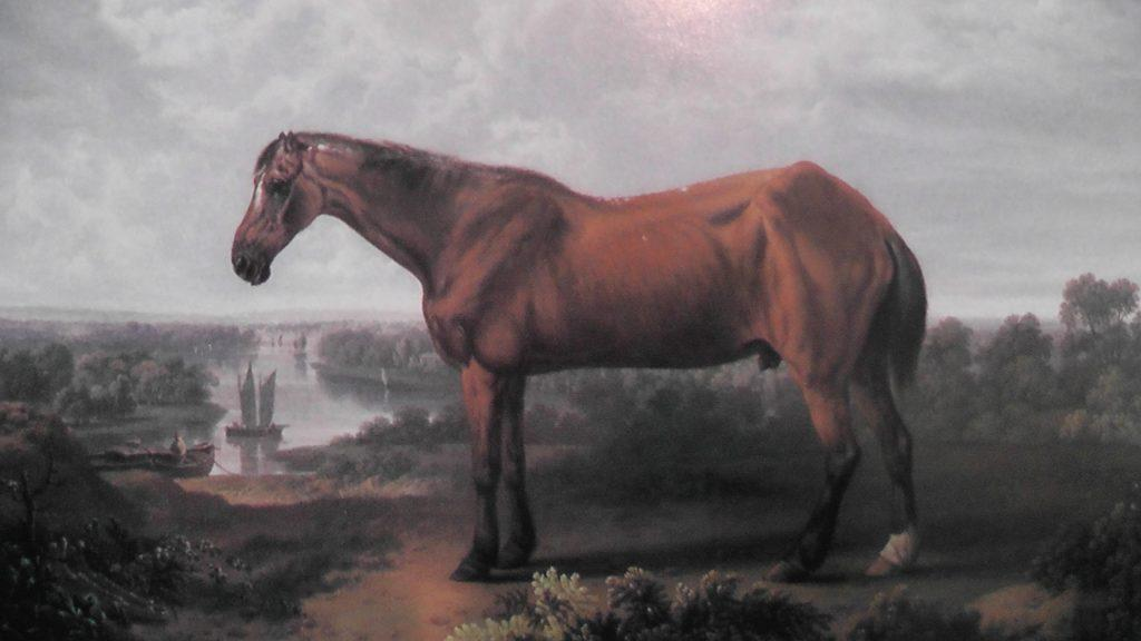 en yaşlı at old billy