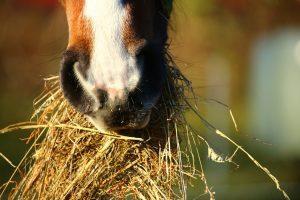 Atlar Karpuz Yer Mi? 1