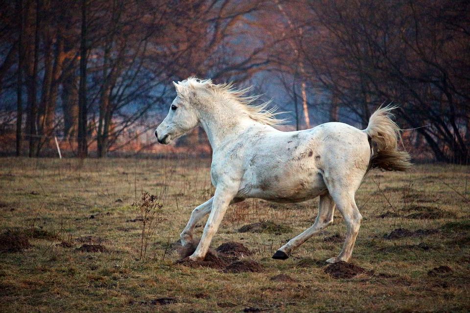 atlar ve özellikleri