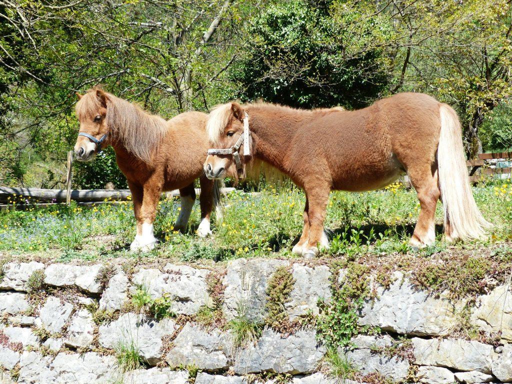 Atlar Hakkında İlginç Kısa Bilgiler
