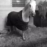 atlar, yaz hastalıkları, kış hastalıkları