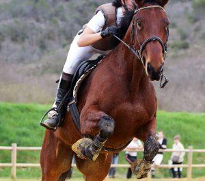 Rahvan Atçılık ve Yarışlar - Rahvan Atların Özellikleri 1