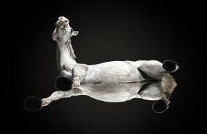 Özgürlük : Onaqui Dağlarında Vahşi Mustang Atlar 2