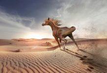 hazreti alinin atı düldül