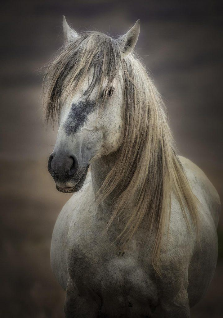 mustang atı