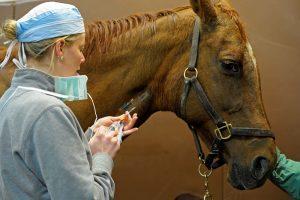 At ve Binicilik Eğitimlerinde Asla Yapmamanız Gereken 7 Büyük Hata! 1