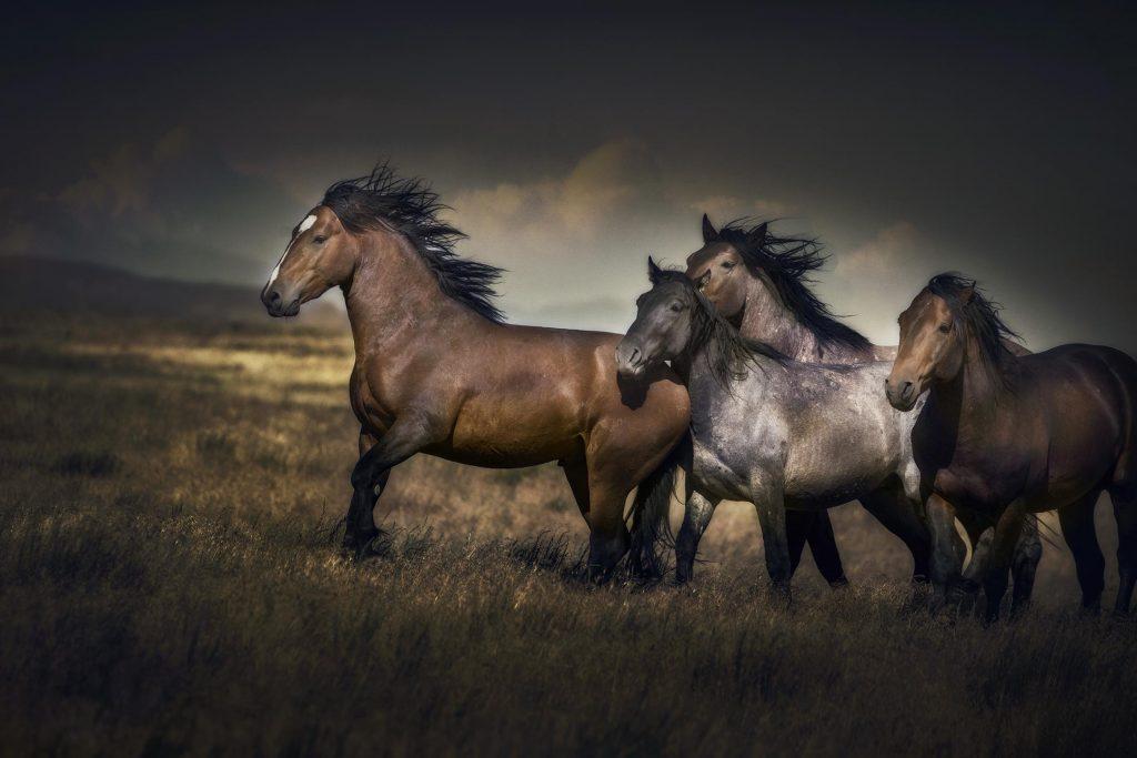 onaqui dağında vahşi mustang atları