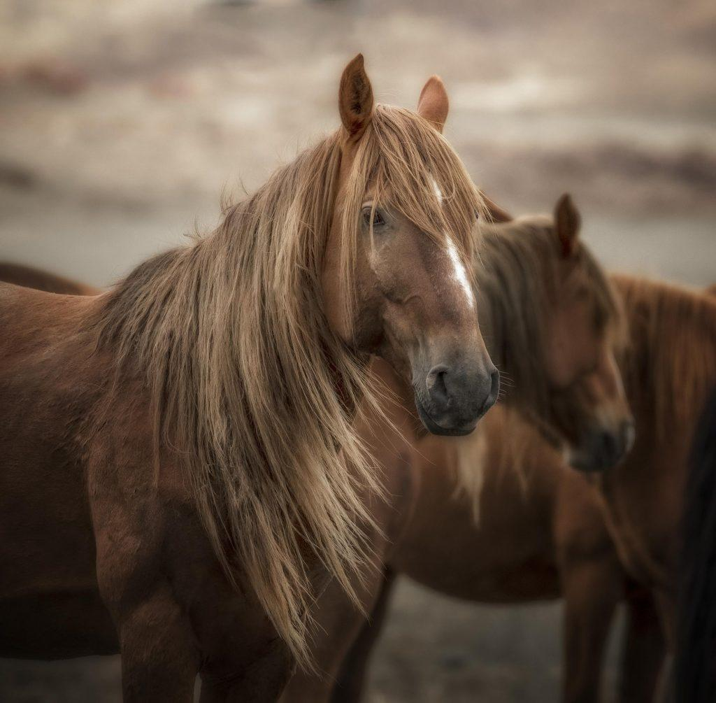 vahşi mustang atı
