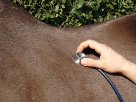 At Satın Alma Rehberi - Satılık Atlar 2