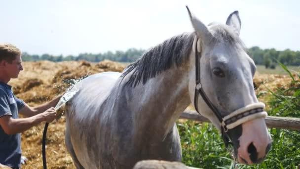 günlük at bakımı yaparken nelere dikkat edilir? At Nasıl Tımar Edilir
