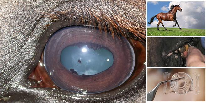Atlarda Yaşanan Göz Rahatsızlıkları Nelerdir? 1