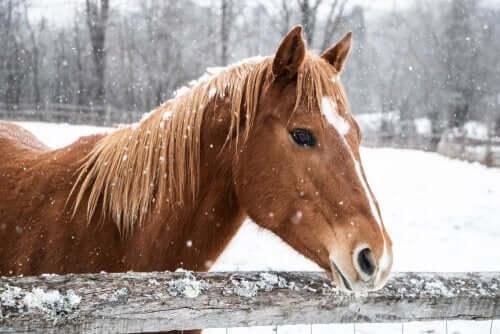 Atların Kışın Bakımı Nasıl Yapılmalıdır? 1