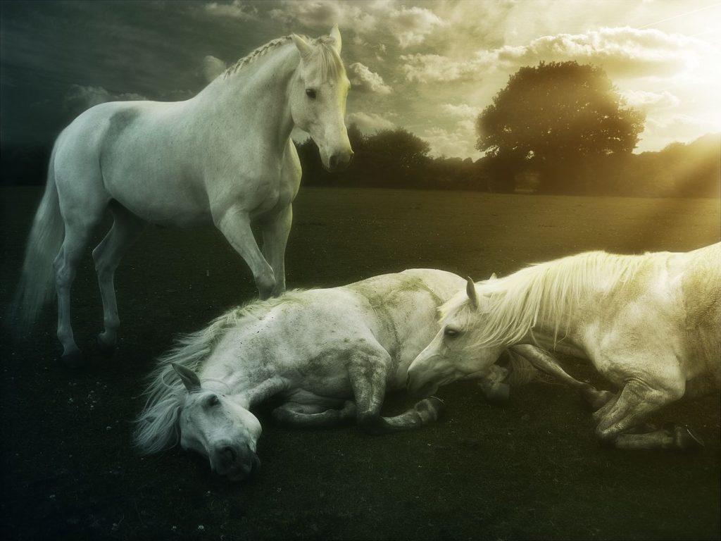 Atlarda İlk Yardım! Acil Bir Duruma Ne Kadar Hazırsınız? 4