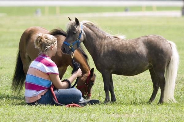 minyatür atlar