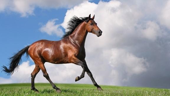 Pistlerin En Hızlı Yarış Atları 2