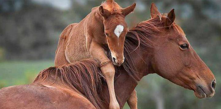 Yeni Doğum Yapan Atın Alması Gereken Vitaminler Nelerdir? 1