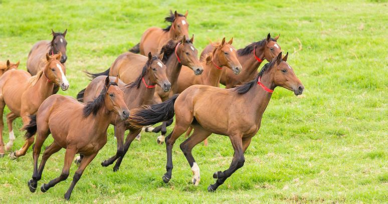 atlara nasıl kilo aldırılır