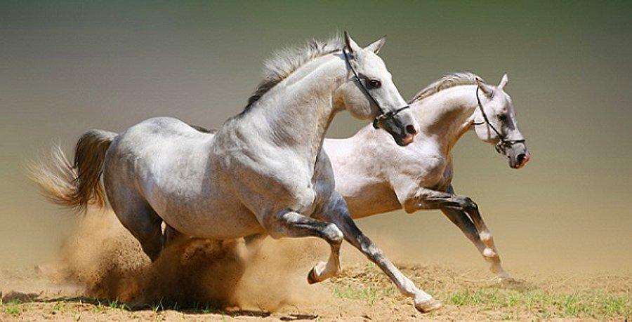 Atlarla İlgili Sözler 1