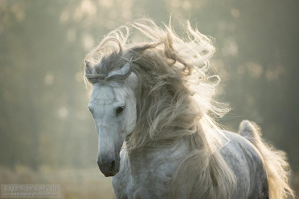 Beyaz At Resmi 1