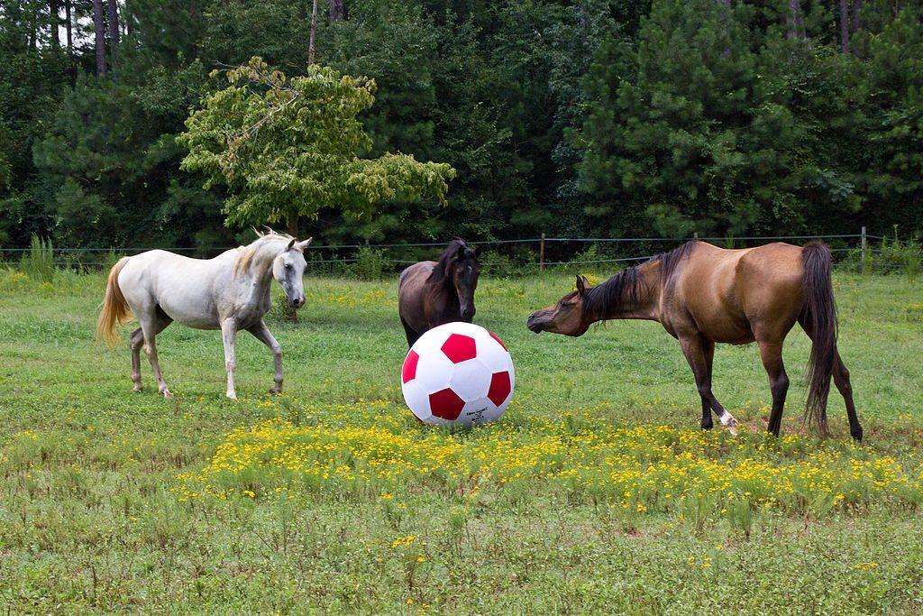 meraklı atlar