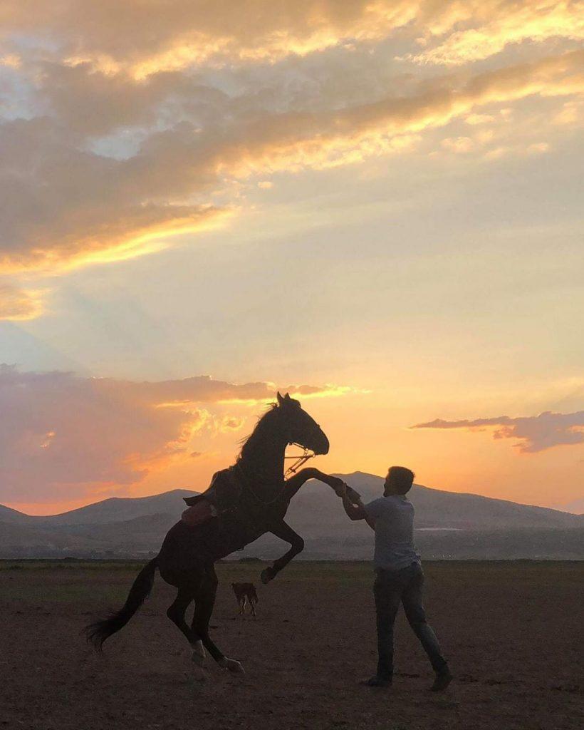 atın iyi olduğu nasıl anlaşılır