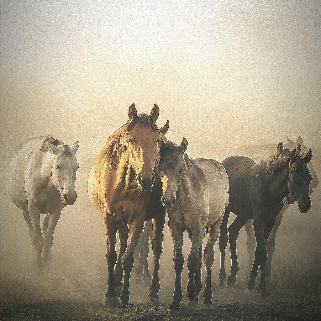 iyi atların özellikleri