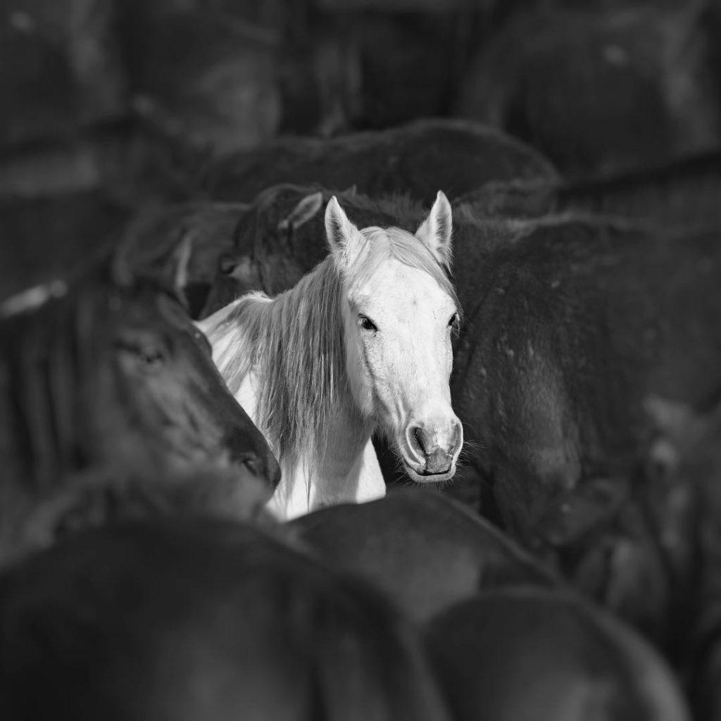 iyi atlarda bulunması gereken özellikler