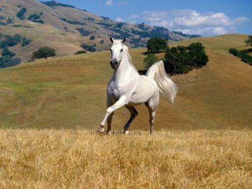 mustang atları hakkında bilgi