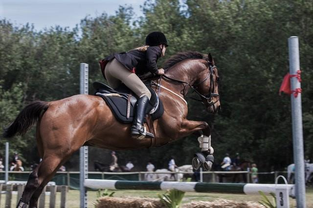 at çalıştırmalarında yem rasyonu