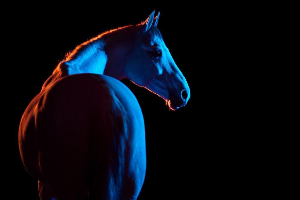 at fotoğrafları yüksek çözünürlük