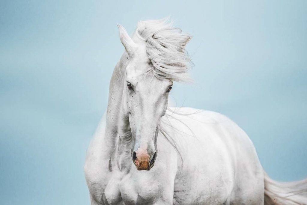 Isabel Brune tarafından çekilen en güzel at fotoğrafları