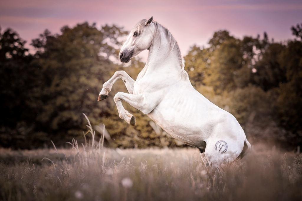 beyaz at resmi
