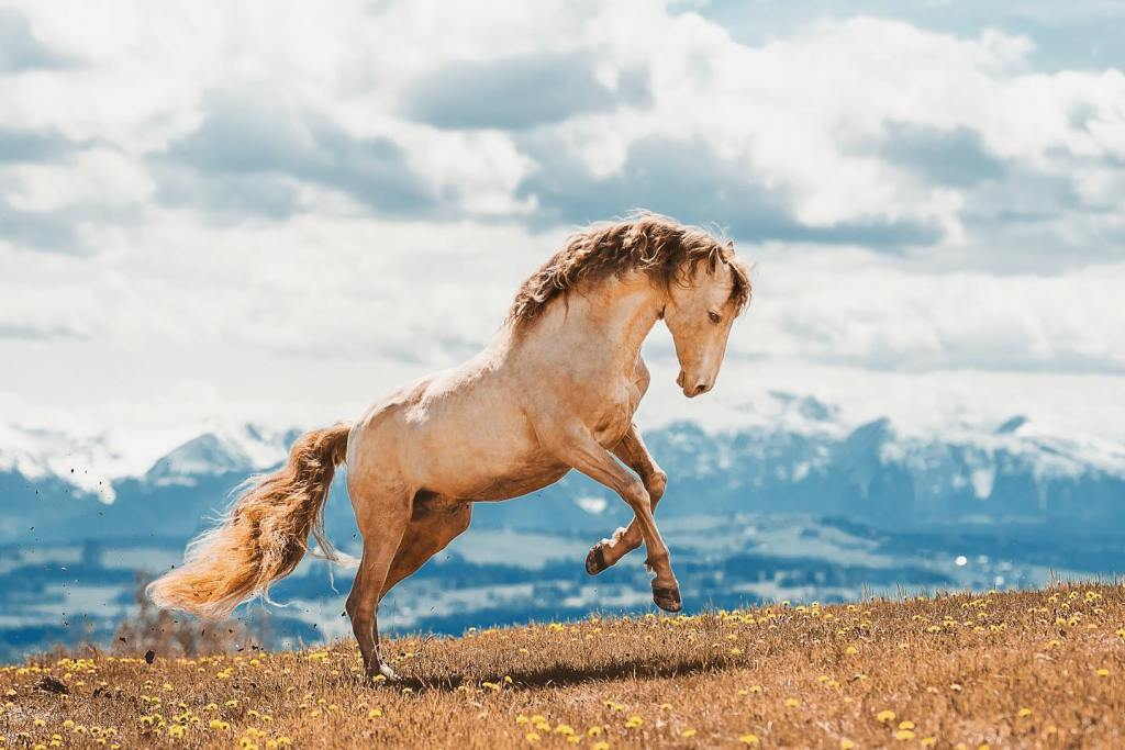 en güzel at resmi