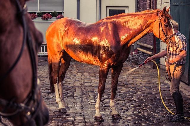 at nasıl yıkanır