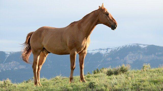 atlarda ruam hastalığı belirtileri ve tedavi yöntemleri