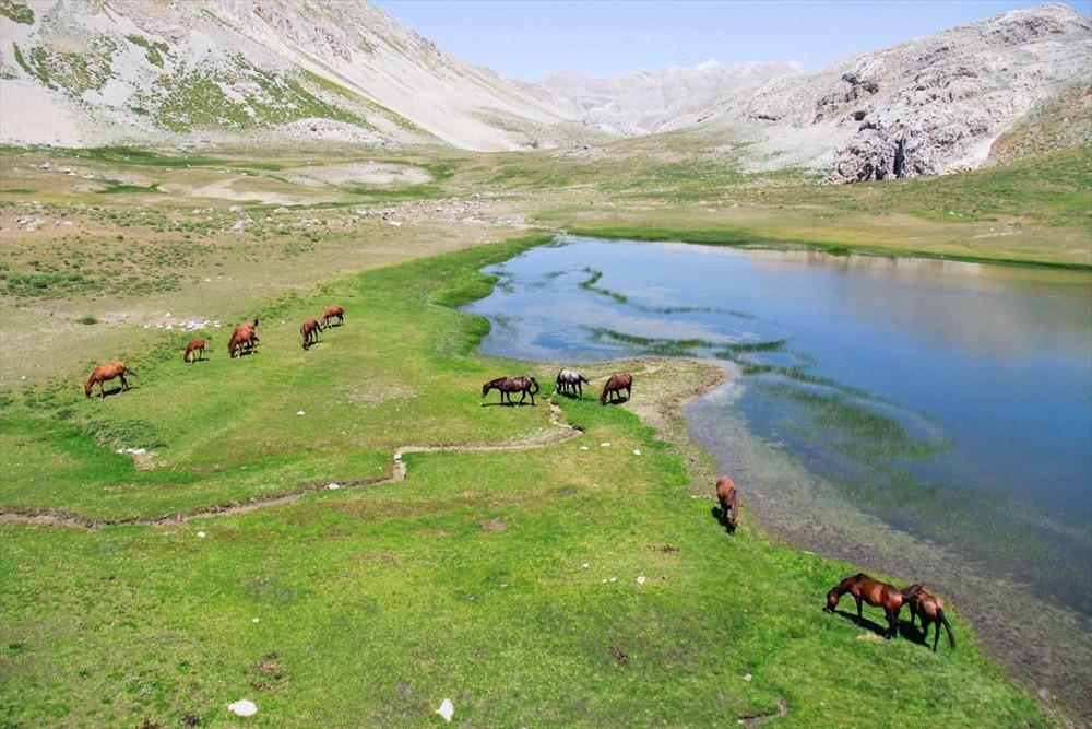 munzur dağı yılkı atları